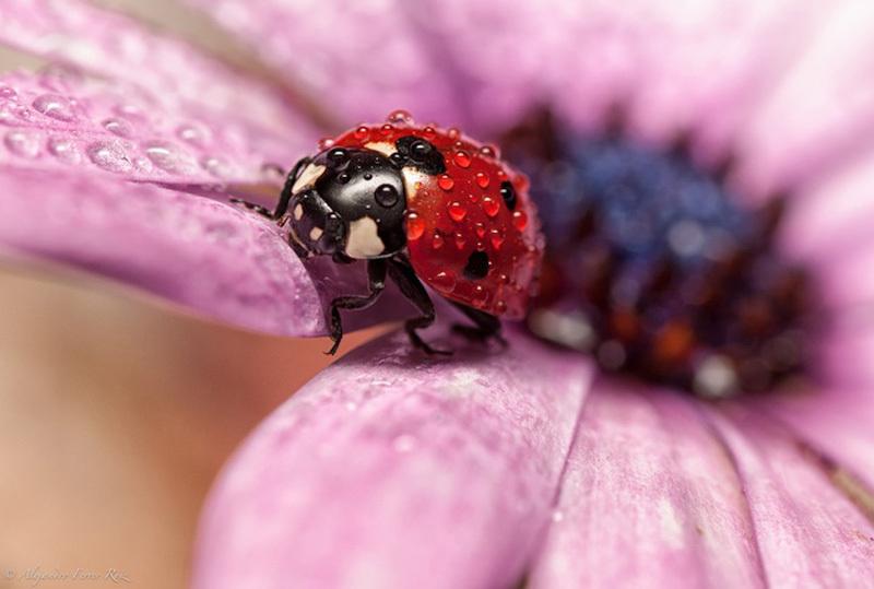 Ladybugs-7