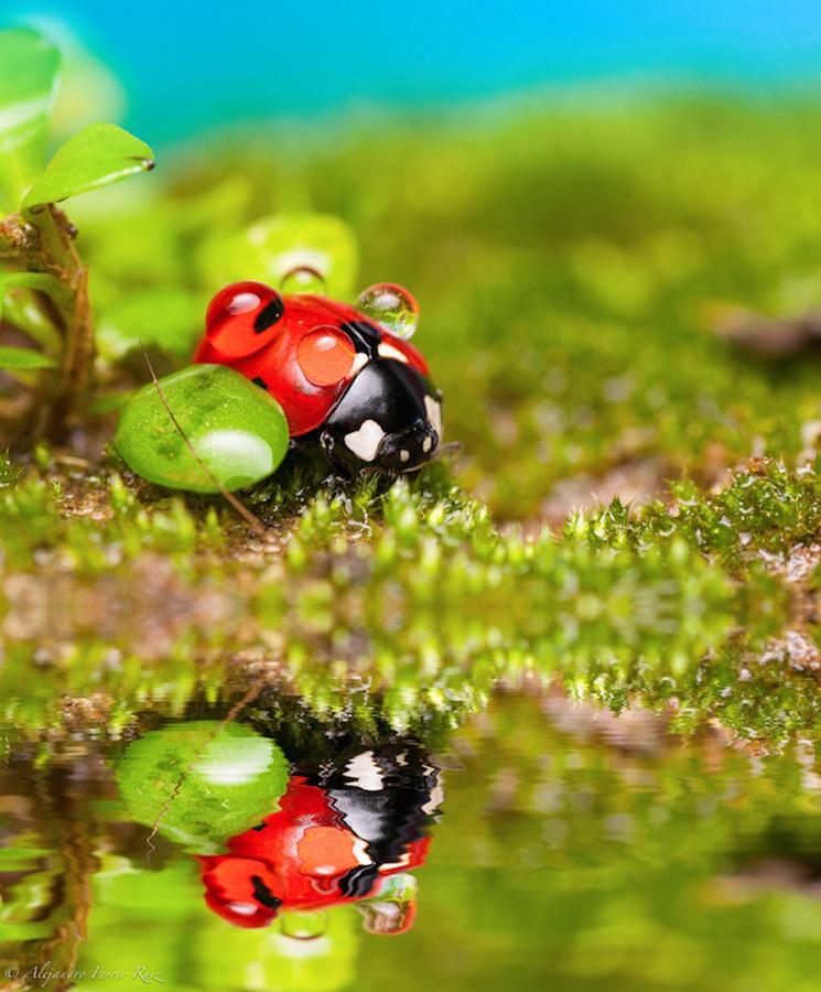 Ladybugs-8