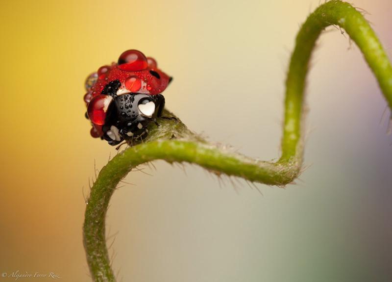 Ladybugs-10