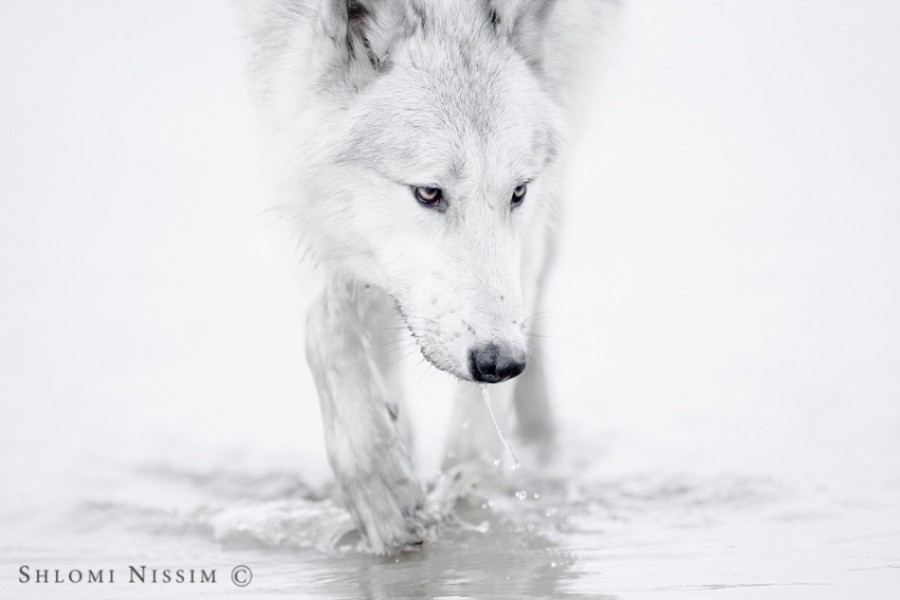 fotograf-Shlomi-Nissim-12