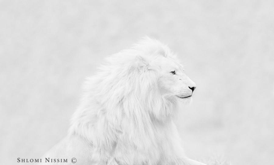 fotograf-Shlomi-Nissim-21-990x597