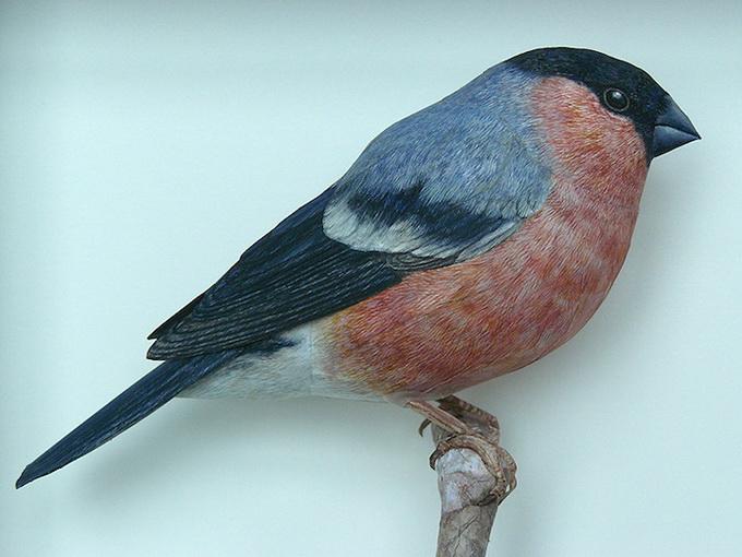 6dbird_