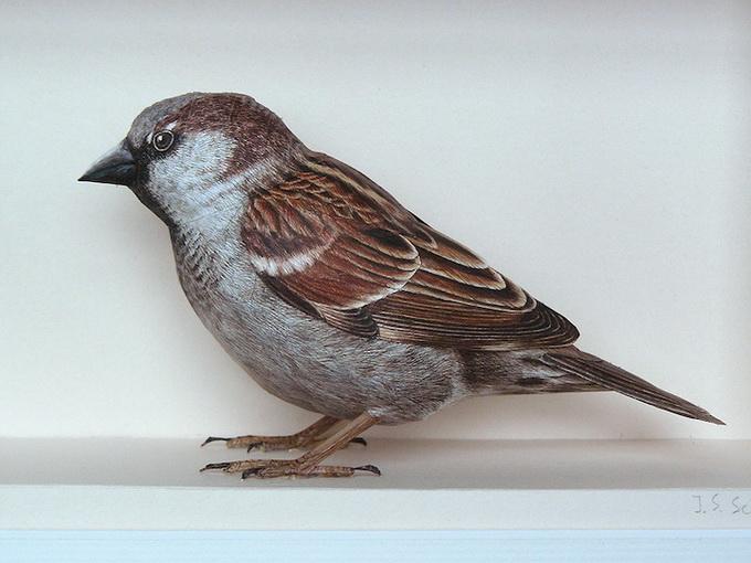 7dbird_