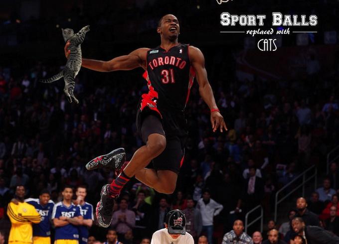 sportsballsreplacedwithcats_08
