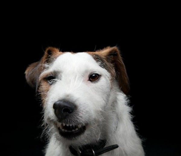 dog__12