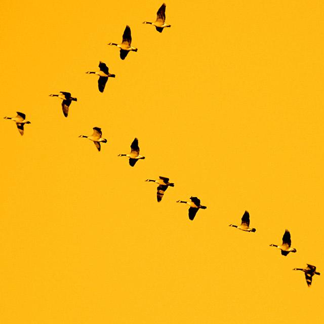bird-03