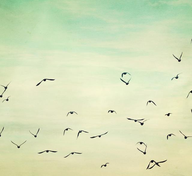 bird-06