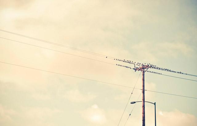 bird-07
