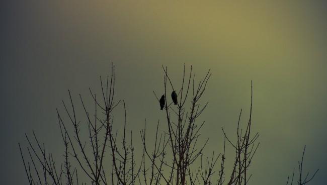 bird-08