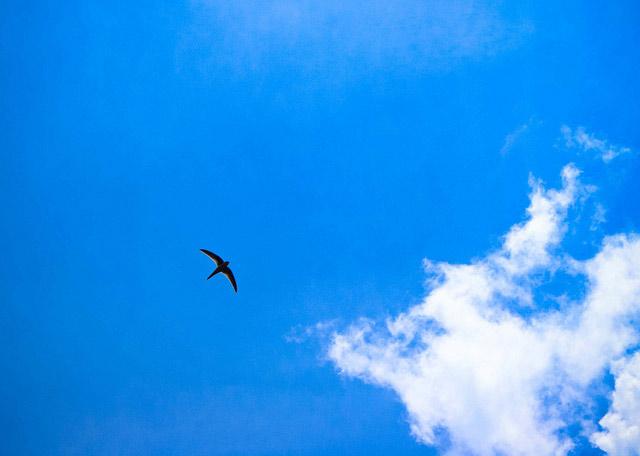 bird-12