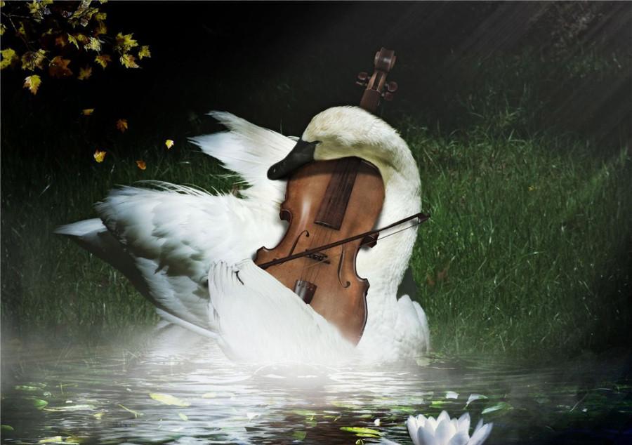 Harmony-in-Nature-02
