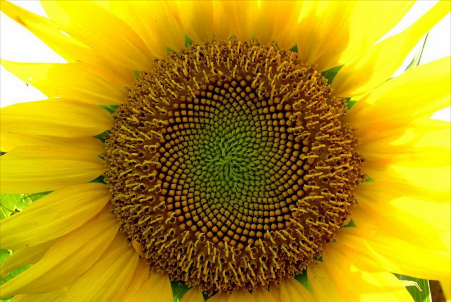 Color_yellow_2