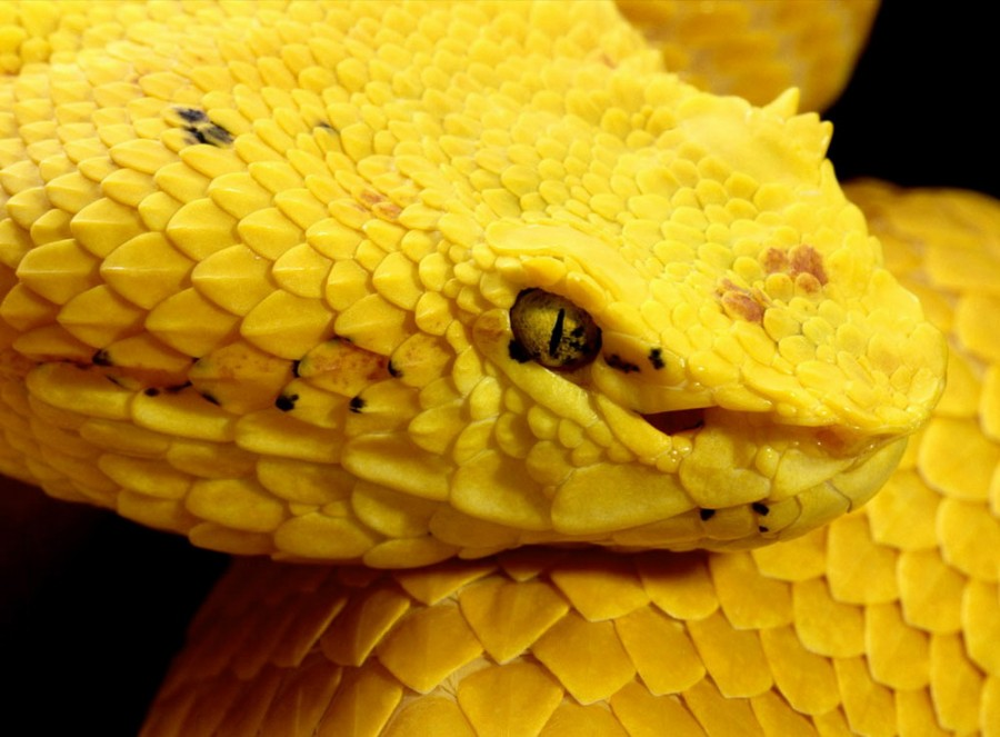 Color_yellow_5