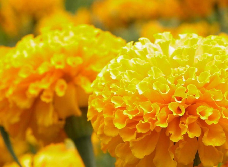 Color_yellow_10