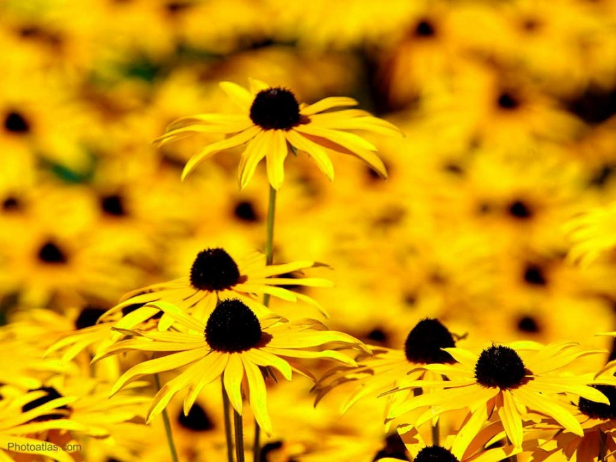 Color_yellow_13