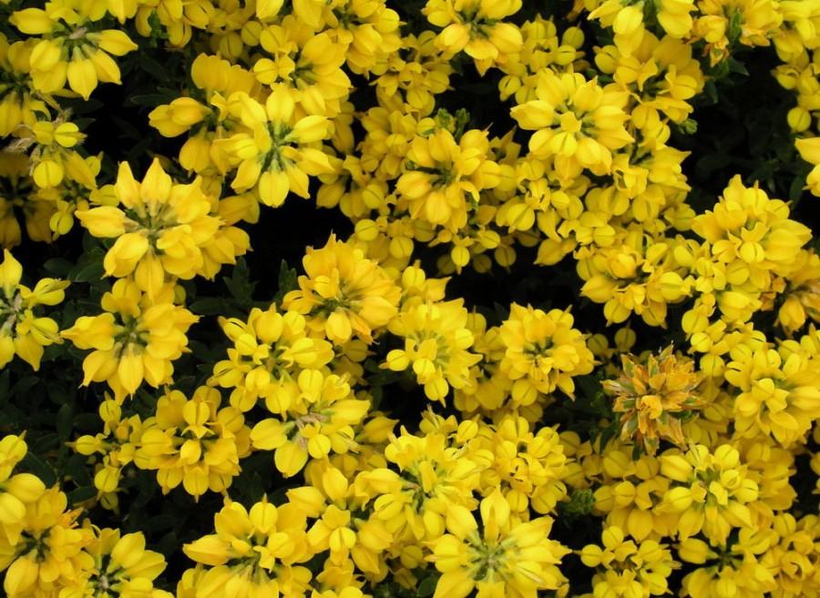 Color_yellow_18
