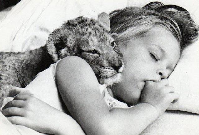 cute kid and tiger friend