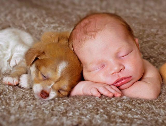 funny cute puppy and kid
