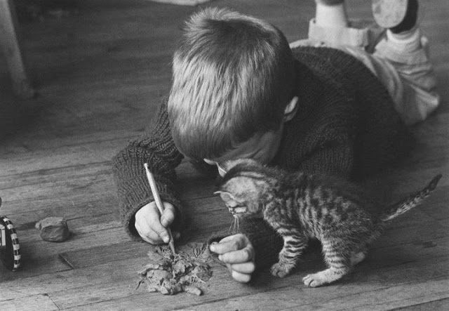 funny kid and busy funny cat
