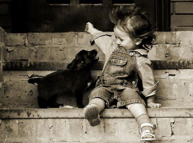 funny kid and dog playing