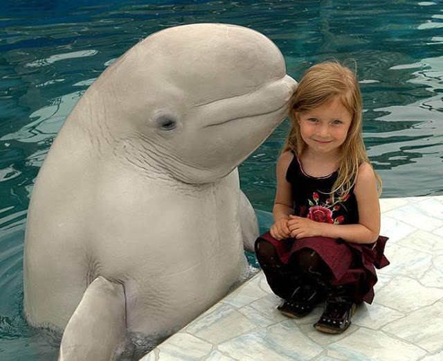 funny kid and dolphin