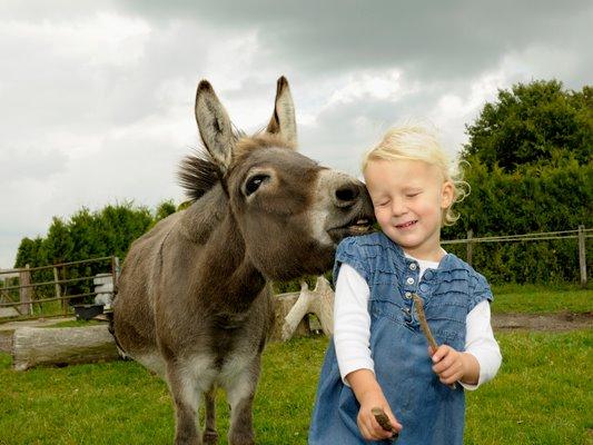funny kid and donkey