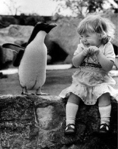 funny kid and penguin