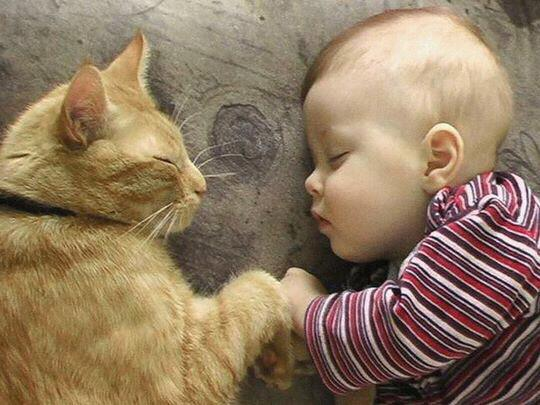 funny kid and sleeping cat