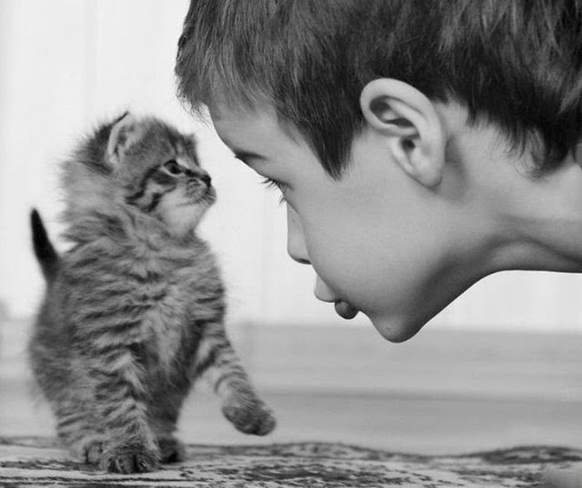 funny kid and small cat