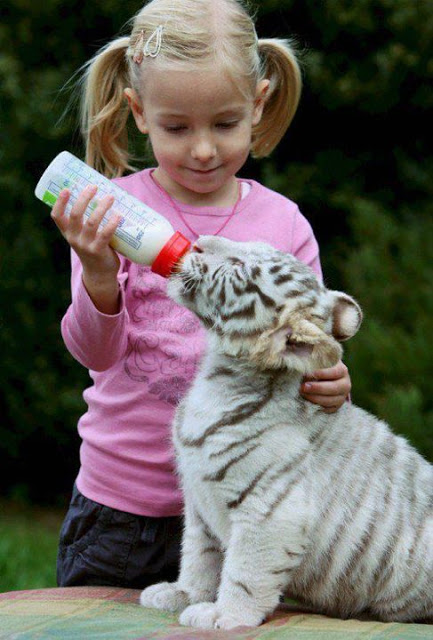 funny kid and tiger