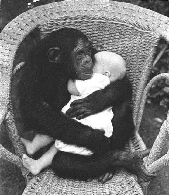funny monkey and kid