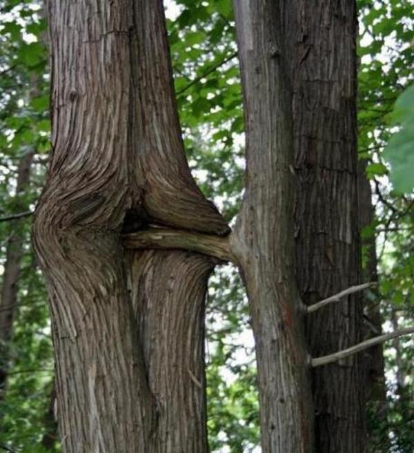 priroda-seksualnih-misley