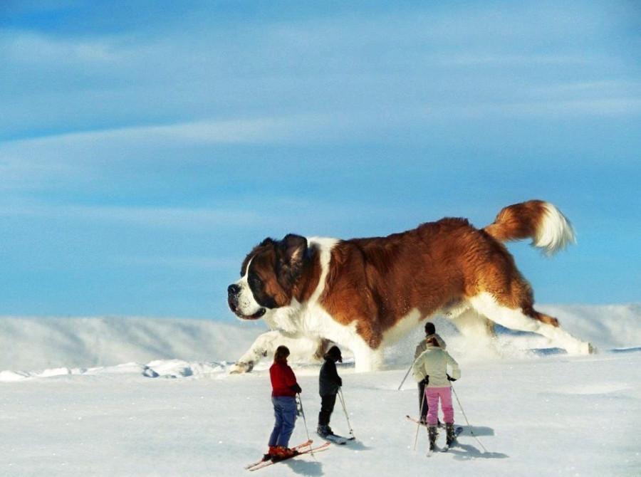 Oversized-Animals-04