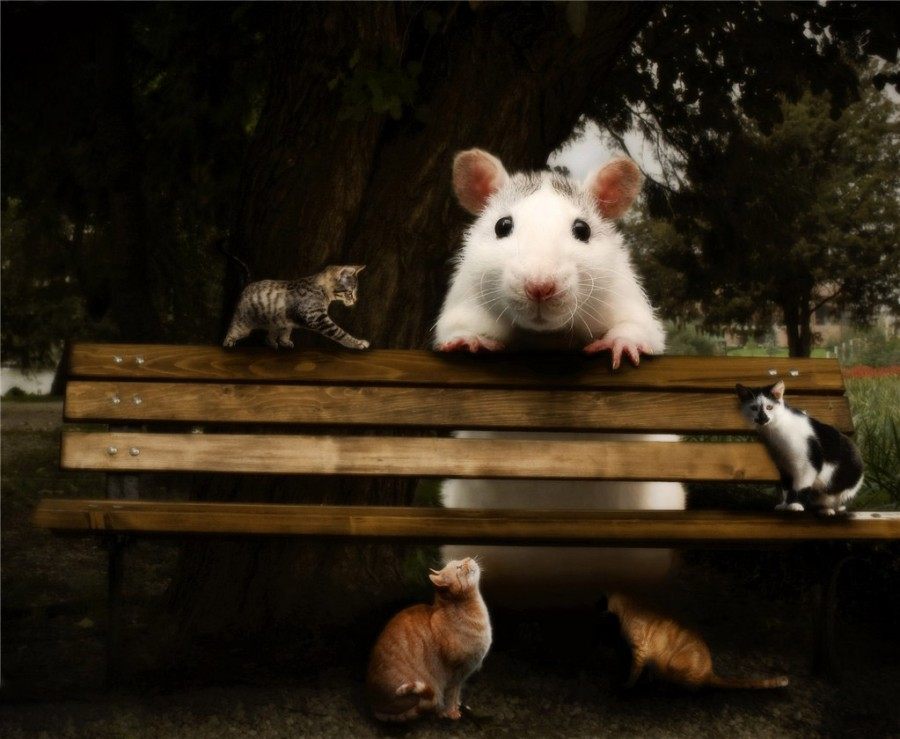 Oversized-Animals-09