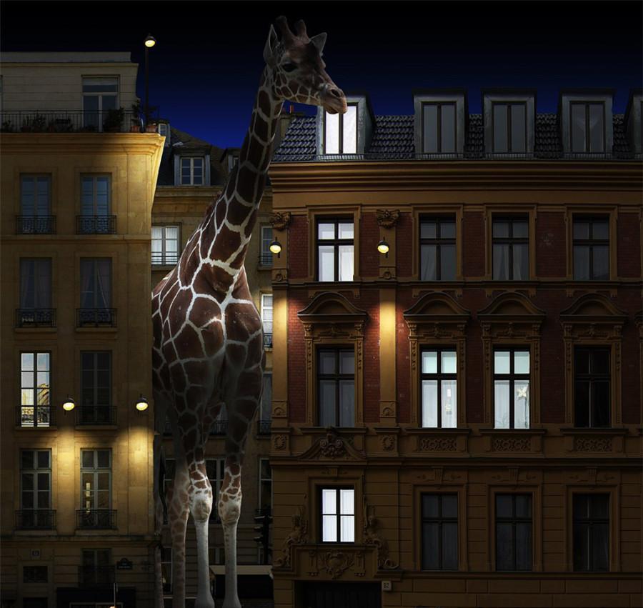 Oversized-Animals-10