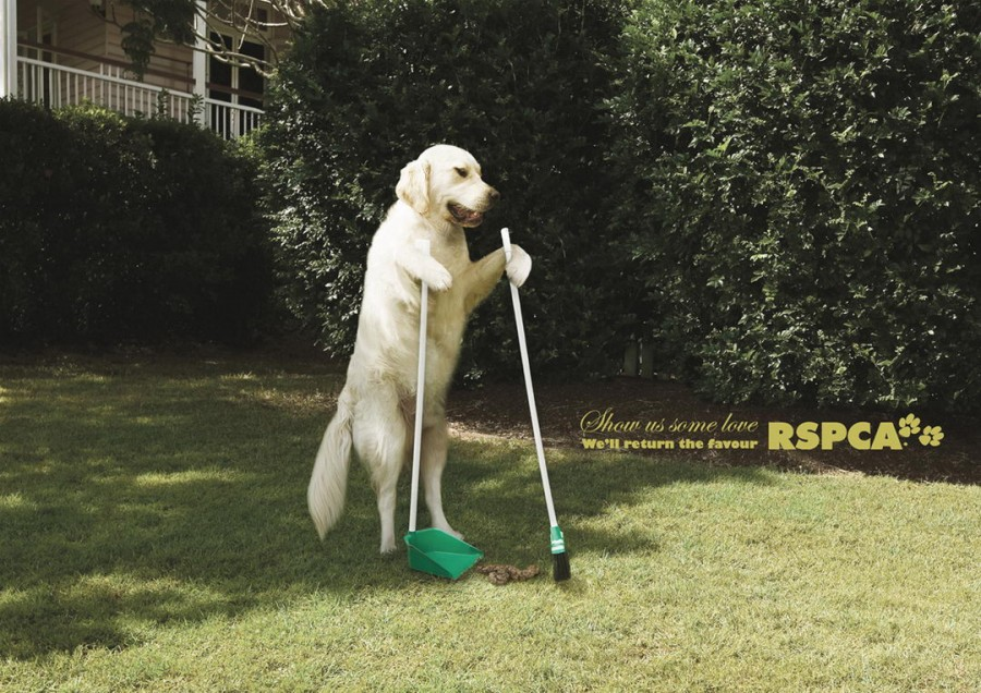 Creative_ad-for_dogs_1