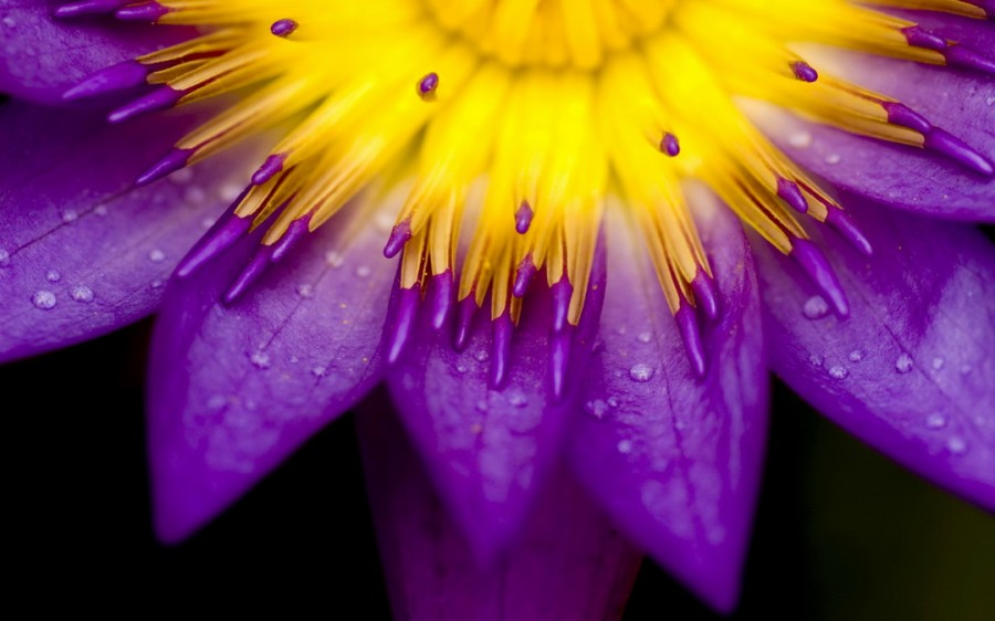 Color_violet_6