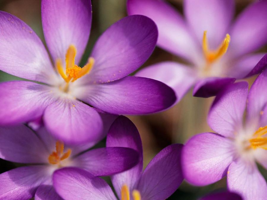 Color_violet_11
