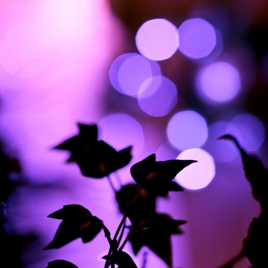 Color_violet_15