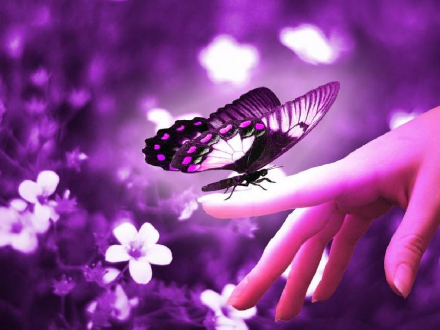 Color_violet_16