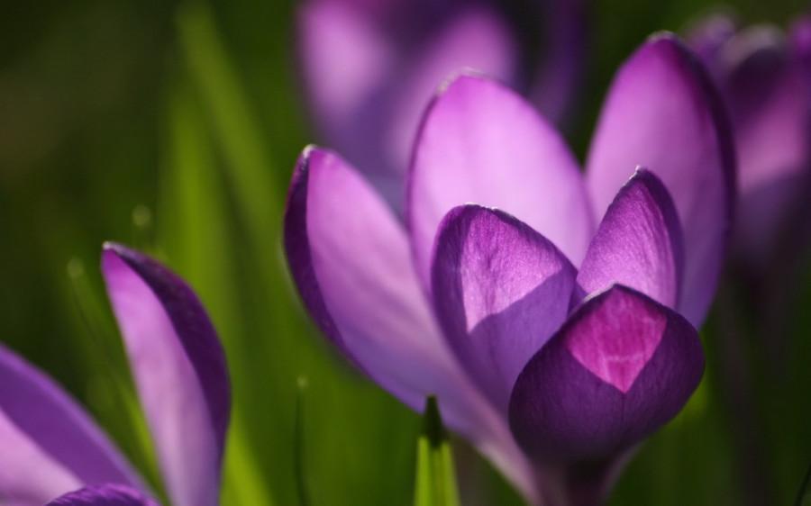 Color_violet_19