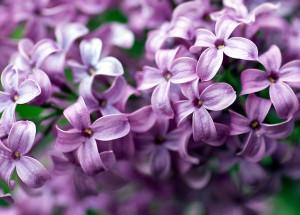 Color_violet