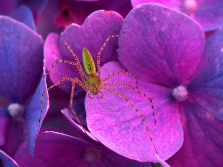 Color_violet_23
