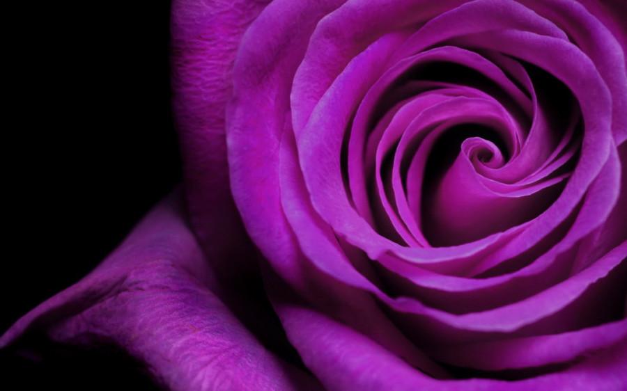 Color_violet_33