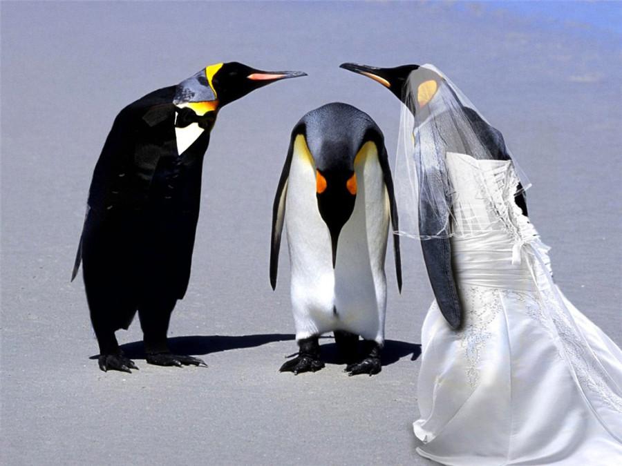 Penguins-07