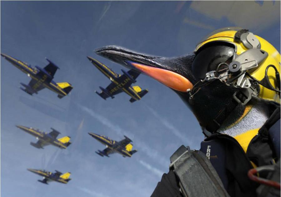Penguins-08