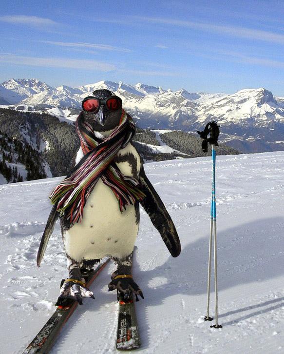 Penguins-16