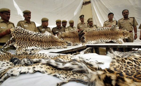 forest-officials-are-authorized-to-shoot-and-kill-poachers1