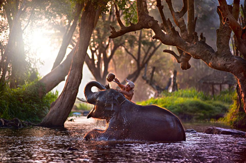 bathing-an-elephant
