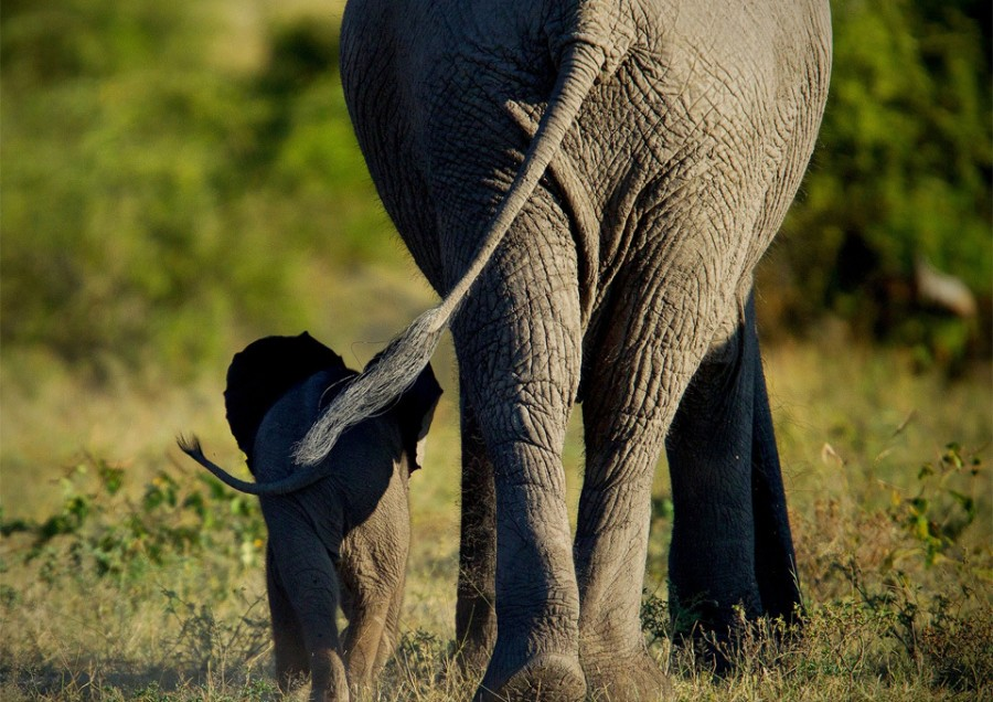 elephant-mom-and-calf